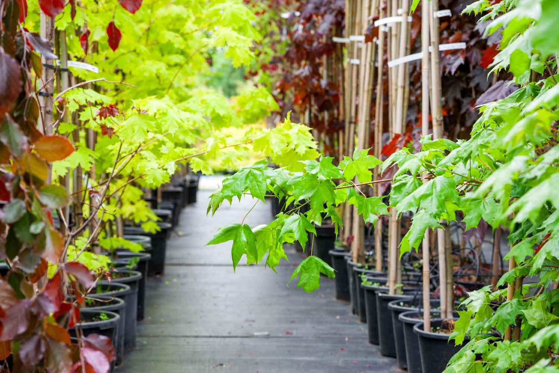 Plant Nursery - OGM Landscape