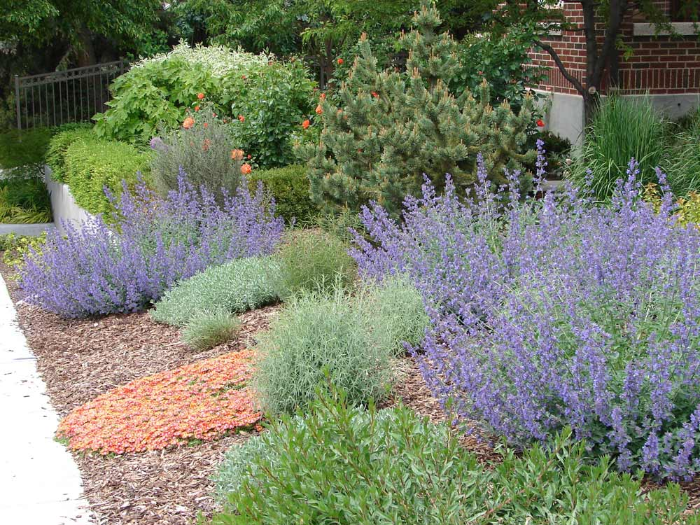 The 4 1 1 On Florida Xeriscaping Ogm